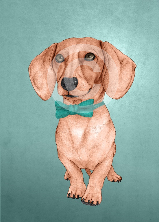 dachshund-the-wiener-dog-prints